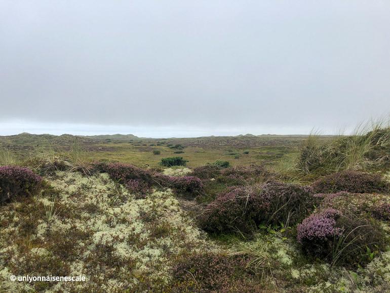 toundra ecossaise dans la forvie national nature reserve